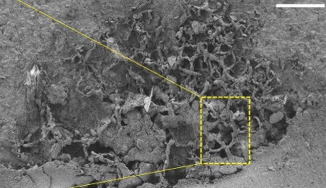 Ανακαλύφθηκαν τα αρχαιότερα απολιθώματα μυκήτων - 715 έως 810 εκατ. ετών