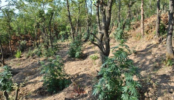 Εικόνα από την έκταση που βρέθηκε στη Φθιώτιδα.