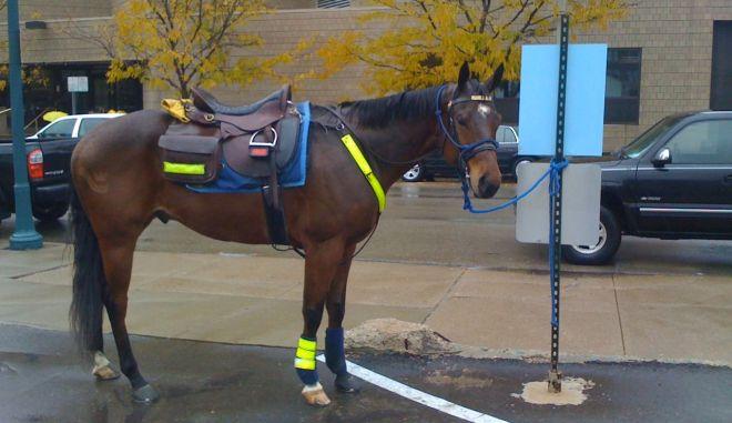 Έδωσαν κλήση... σε άλογο!