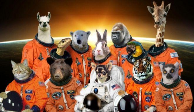 Ποια τετράποδα έχουν μπει σε ...διαστημόπλοια