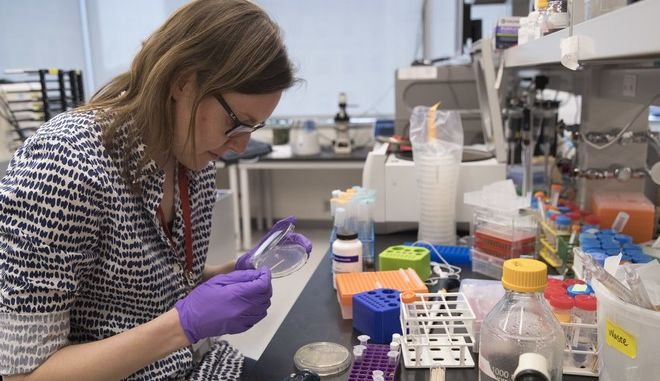 "In this Tuesday, April 25, 2017 photo, post doctoral fellow Leslie Mitchell, works at her bench at a New York University lab in the Alexandria Center for Life Sciences in New York, where researchers are attempting to create completely man-made, custom-built DNA. Mitchell says it took her a couple months to build her chromosome but longer to debug. ""The tiniest change in the code can have dramatic effect on growth, she said. We are learning new rules about how cells operate by building from scratch."" (AP Photo/Mary Altaffer)"