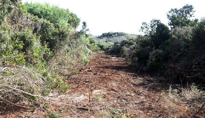 Παράνομη εκχέρσωση δασικής έκτασης 10 στρεμμάτων, στο βουνό του Κατακόλου, που εντοπίστηκε από το Δασαρχείο Πύργου, την Τετάρτη 21 Ιανουαρίου 2015. (EUROKINISSI/ILIALIVE.GR/ΓΙΑΝΝΗΣ ΣΠΥΡΟΥΝΗΣ)