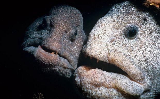 Τα 9 πιο άσχημα ψάρια που κρύβονται στο βυθό