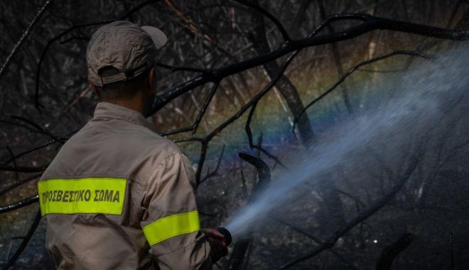 Πυροσβέστης επιχειρεί κατάσβεση σε δασική πυρκαγιά, Αρχείο
