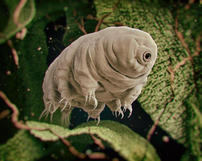 Ξεχάστε τις κατσαρίδες: Αυτό είναι το πλάσμα που θα επιζήσει της Αποκάλυψης