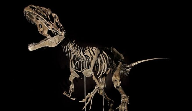 Μυστηριώδης σκελετός δεινοσαύρου πωλήθηκε για 2,3 εκατ. δολάρια
