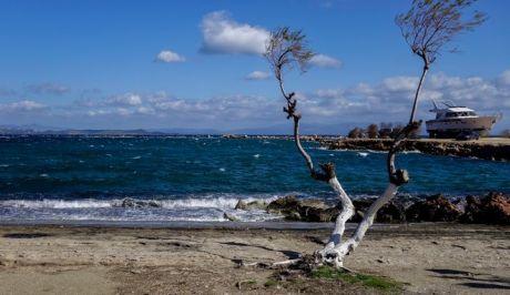 Δέντρο σε παραλία της Νέας Μάκρης