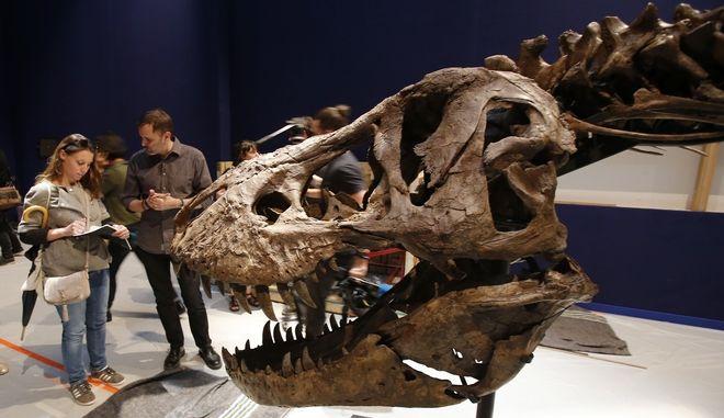 Σκελετός τυραννόσαυρου Ρεξ - φωτογραφία αρχείου