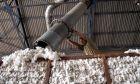 Κορονοϊός: Συναγερμός στη Λιβαδειά - 18 κρούσματα σε εκκοκκιστήριο