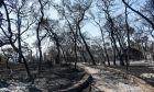 Αχαϊα: Μαύρισαν τα πάντα από τη μεγάλη φωτιά - Αποκαρδιωτικές εικόνες